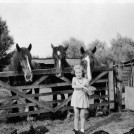 Photo:Doreen Kneller with Henry Parcell's working horses