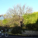 Page link: The Old Mulberry Tree in the High Street