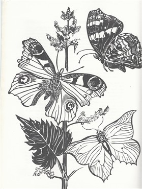 Photo: Illustrative image for the 'Butterflies and the Clunch Pit' page