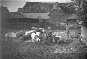 Photo:The farmyard in the 1930s