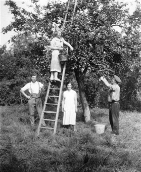 Photo:Members of the Flack family; Connie (up ladder), Sidney Oliver (left) Florence Mary, and Sidney Alfred (right)